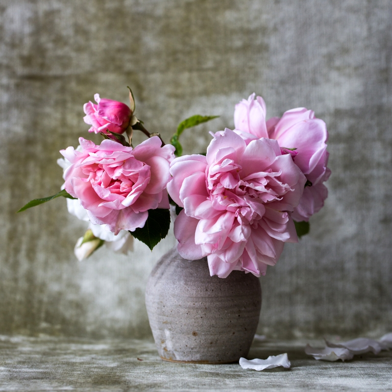 Pink flowers in a vase with a gray backdrop.